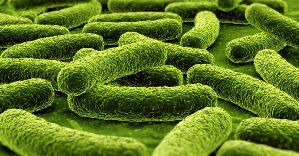 Bactériologie et Plaque Dentaire