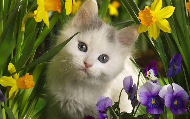 Cute-Kitten-kittens-16096569-1280-800